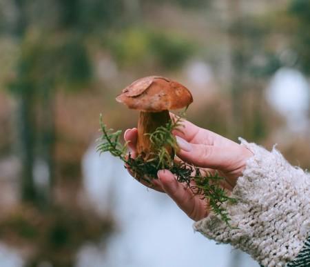 Tuotekuva Ihmeelliset sienet -virtuaalikerholle